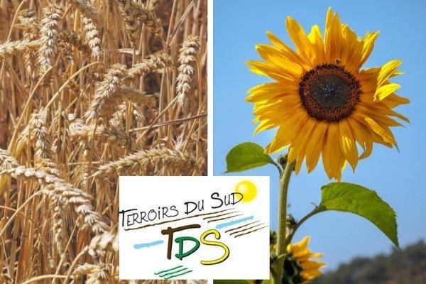 Coopérative agricole Terroirs du Sud utilise TDC Sécurité